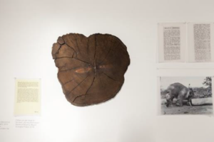 "Lucy Davis Together Again (Wood:Cut) Part V: EVIDENCE 2014 Artist Collection Logs courtesy of Allen Oei [""When you get closer to the heart, you may find cracks"": Stories of Wood by Migrant Ecologies Project, 2014] Courtesy of NUS Museum"